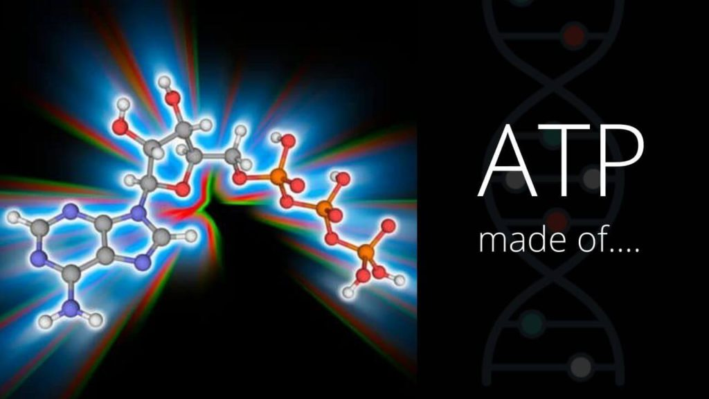What is ATP made of