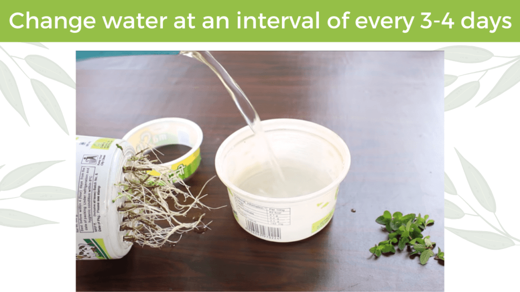 change water at an interval of every 3-4 days