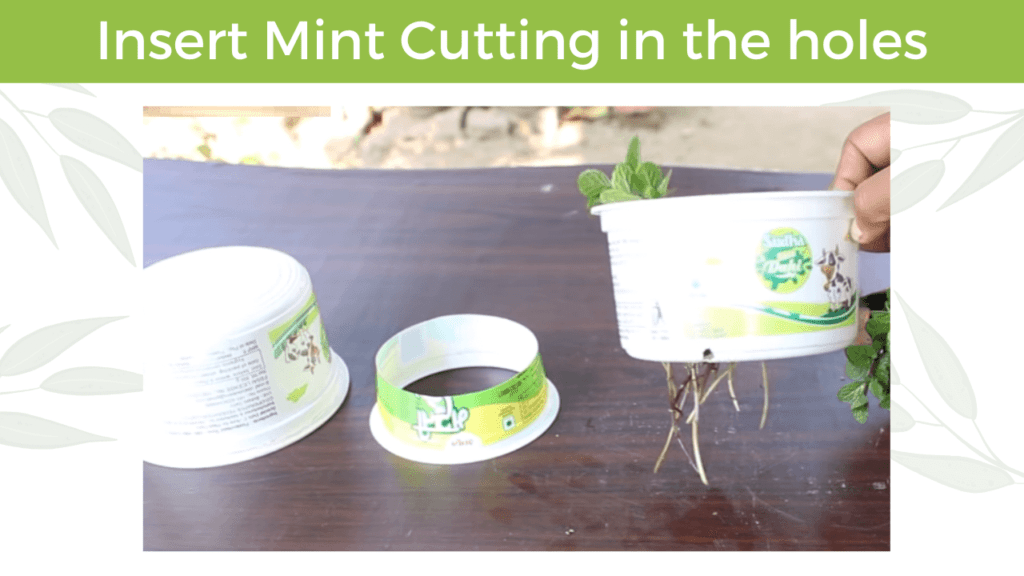 insert mint cutting in the holes