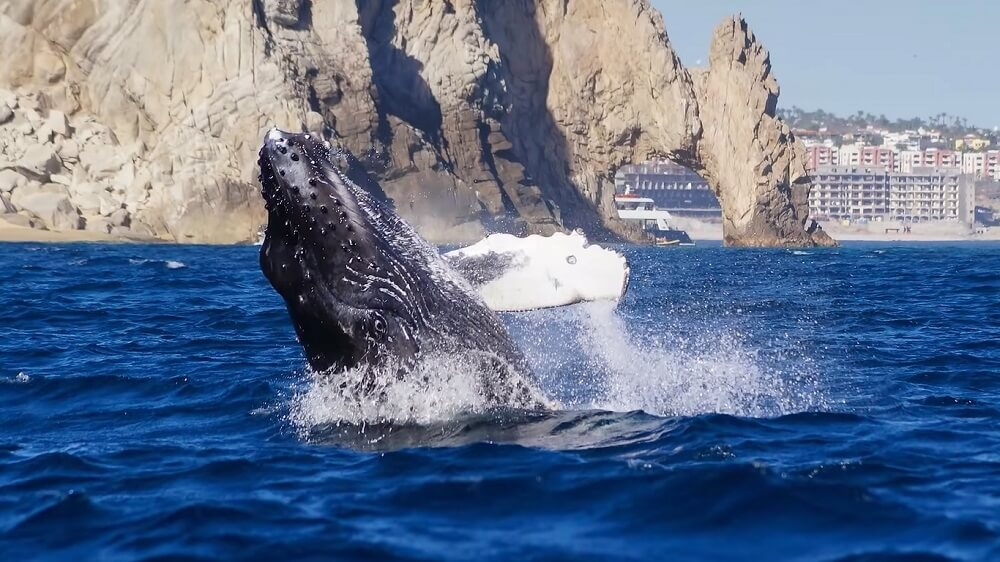 Cabo San Lucas (Mexico) - Best Whale watching place to visit