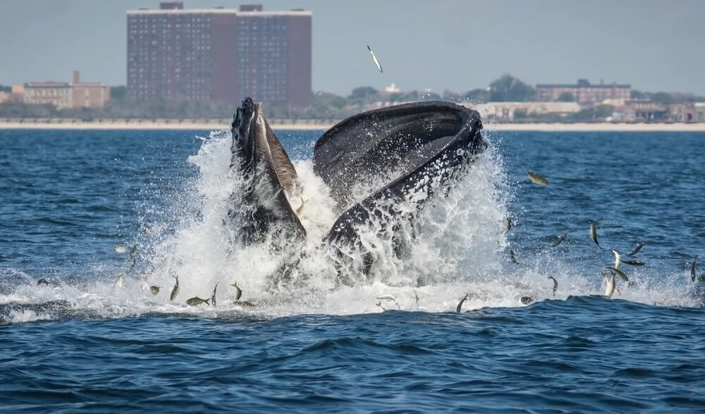 Long Island (New York) - Best Whale watching place to visit