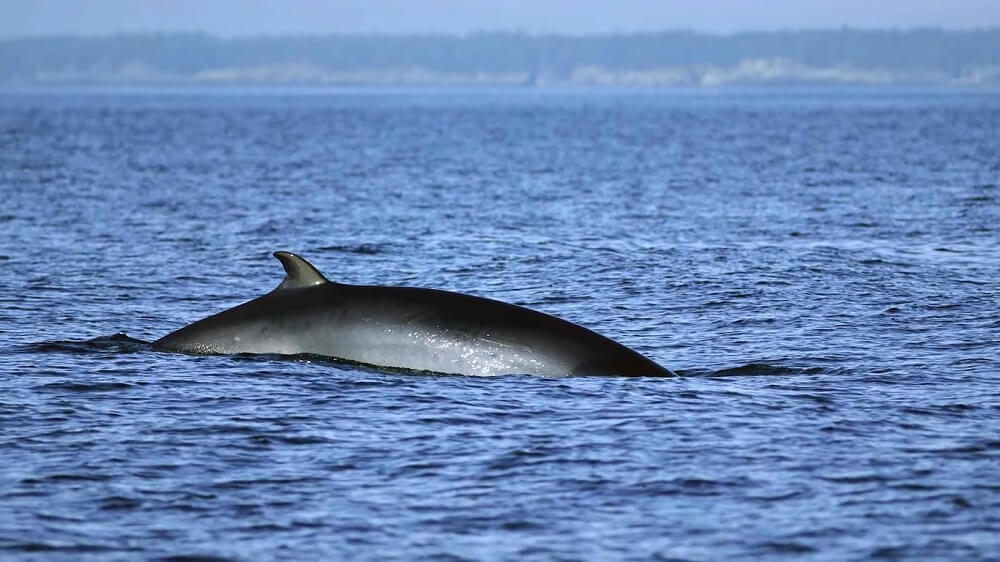 Tadoussac (Canada) - Best Whale watching place to visit
