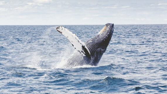 Top 10 Whale Watching places to visit in North America