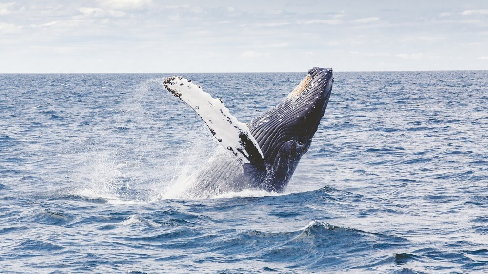 best whale watching places in North America