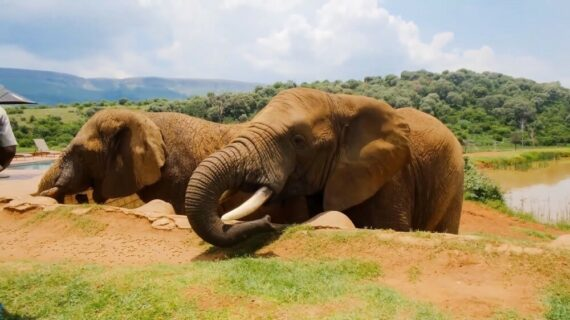 Top 10 Destinations to see wildlife (Best Wildlife Places)