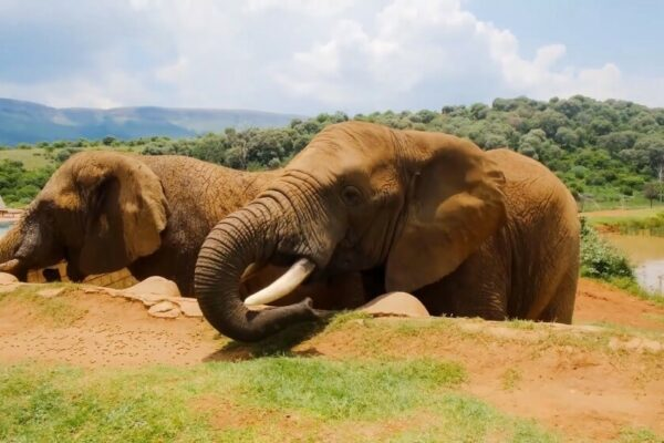 Top 10 places to see wildlife
